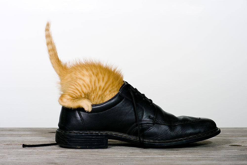 Katze im Schuh, cat in a shoe